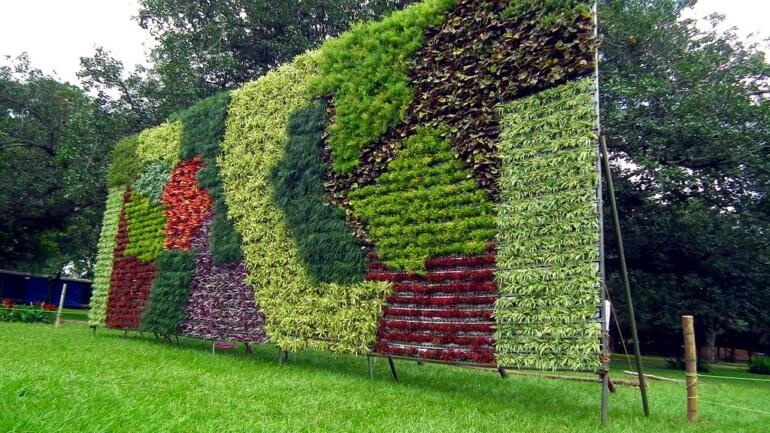Лучшие растения для вертикального озеленения